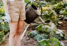 Garten Sicherheit Gartenarbeit Unfallprävention Blumen